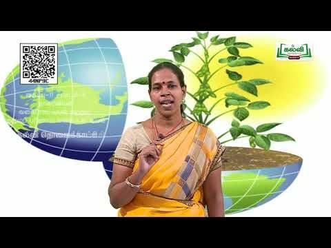 11th  Botany வகைப்பாட்டியல்(ம)குழுமப்பரிணாம மூடுவிதை தாவரங்கள் அலகு 2 பகுதி 1 Kalvi TV