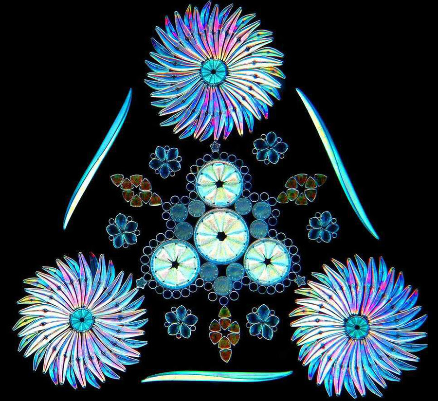 Contemporary Artistic Arrangements of Microscopic Diatoms by Klaus Kemp science microbes fossils algae