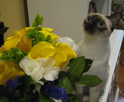 Cassie and Flowers