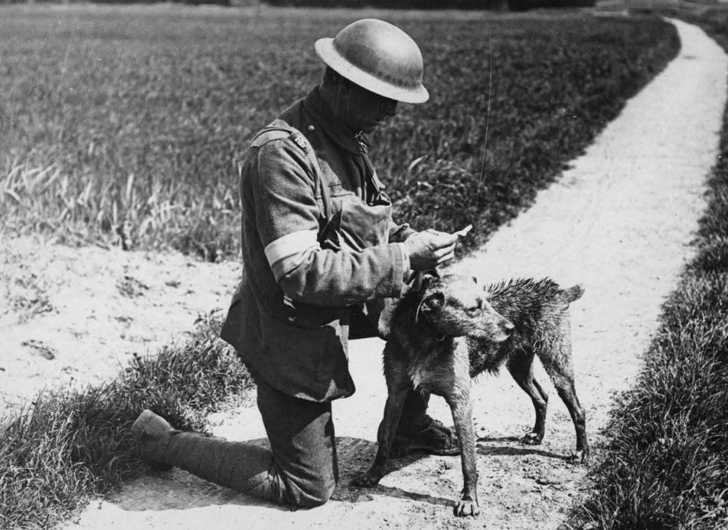 Os animais também lutaram na Primeira Guerra Mundial 33