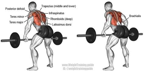 bent  barbell row exercise guide  video weight