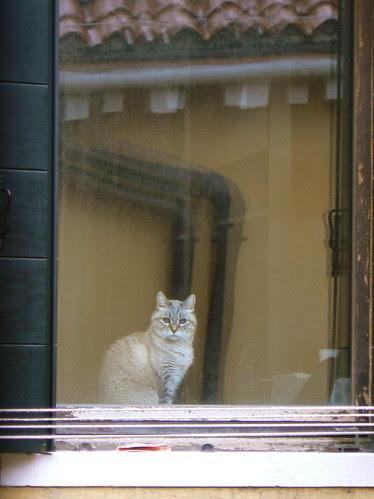 Venice Cat II