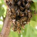Apicultores denuncian las cosechas irregulares por pesticidas y contaminación