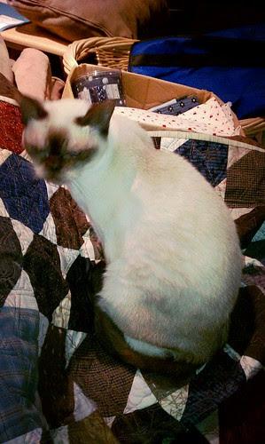 Rhapsody likes my quilt. by aviva_hadas