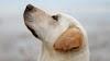 Cinco curiosidades que no conoces de tu perro