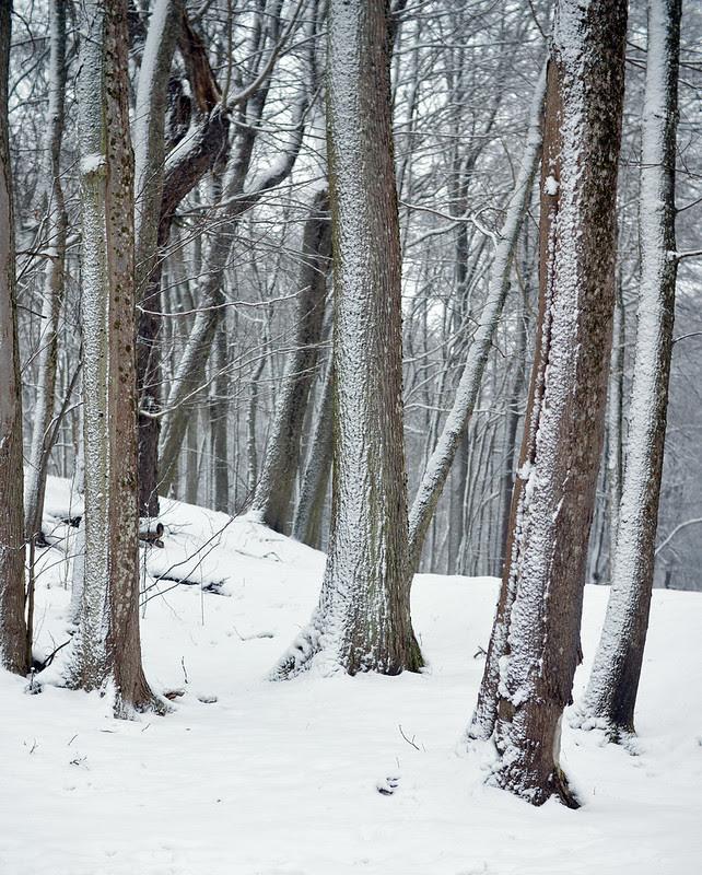 012 träd