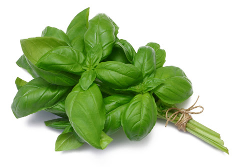 Image result for images of Basil