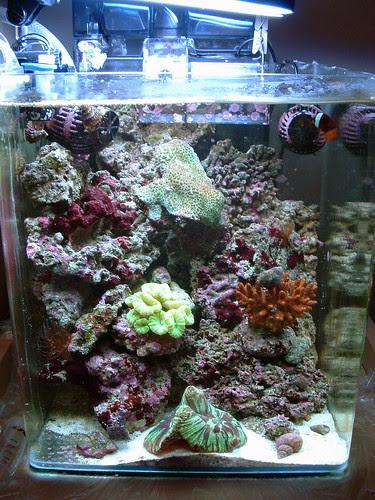 Nano récif au 26 juin 2008