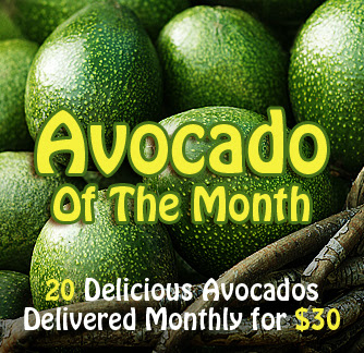 avocado of the month