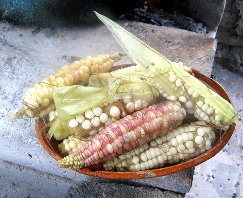 Elotes/Corn