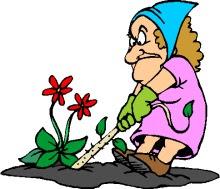old woman weeding a garden