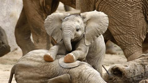 celebrate national elephant appreciation day