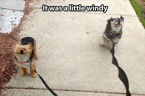 windy dogs, dog meme