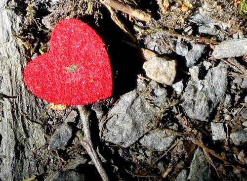 heart :: hjerte