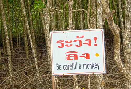 Be careful a monkey, Phuket
