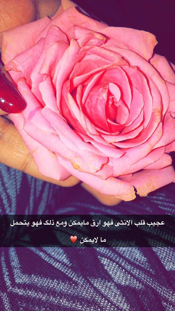 عبارات جميلة عن الورد تويتر Aiqtabas Blog