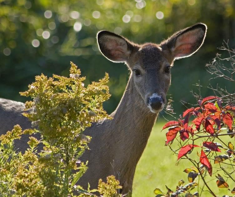 How To Keep Deer From Eating Flowers