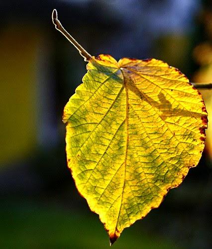Leaf  lit up