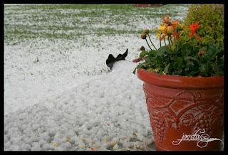 Ugh Hail...