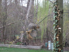 Squirrel feeder??