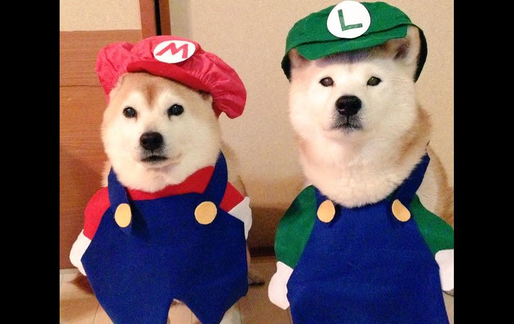 Good dogs screenshot