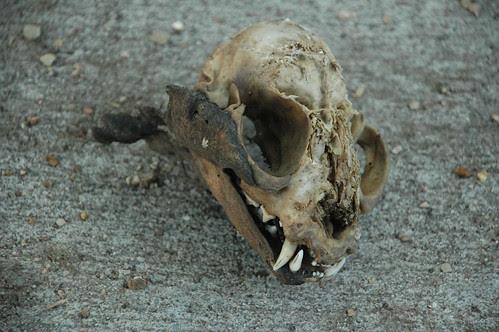 Sidewalk Skull, Westminster Road
