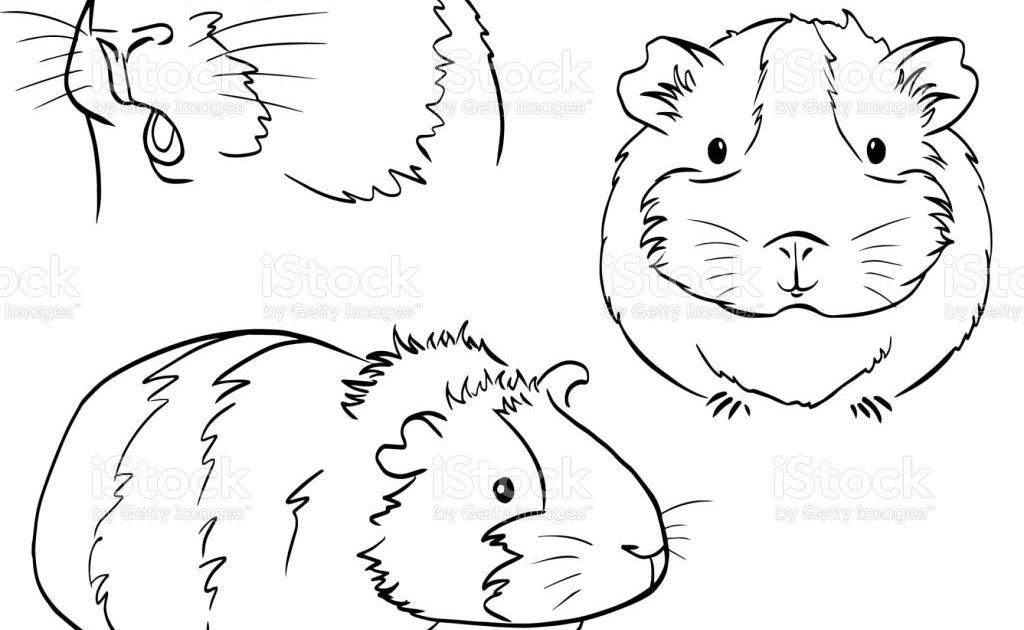 meerschweinchen zum ausmalen  ausmalbilder