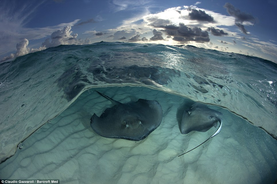 Fantastic scenes: The experience was described as 'amazing' by Mr Gazzaroli and he said the rays 'come very close to you and it is possible to touch them'