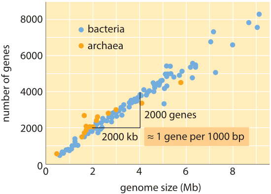 The Diagram Below Shows A Length Of Dna Containing A Bacterial Gene
