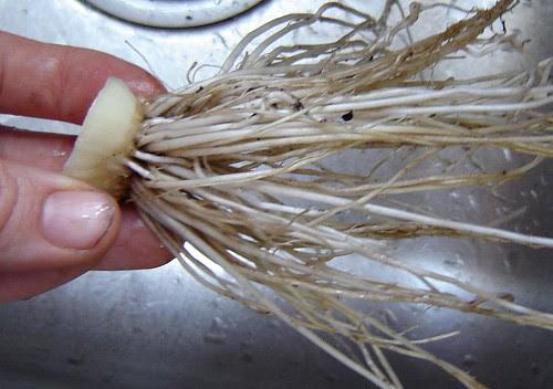 Onion 2