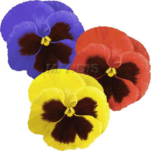 パンジーの花三色すみれの花のイラスト条件付フリー素材集