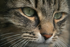 The Neighborhood Cat