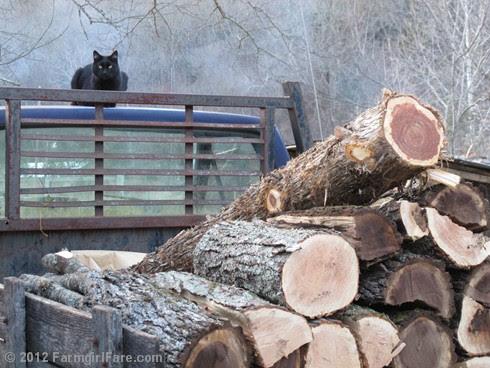 Mr. Midnight on firewood watch duty - FarmgirlFare.com