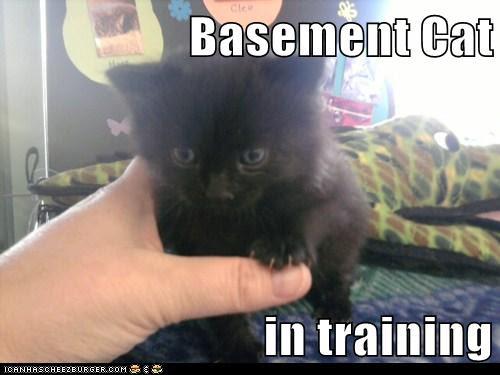 Basement Cat  in training