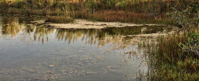 Periphyton floating at edge of lake 20131215