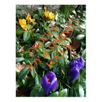 Joy of Spring Crocus Postcard