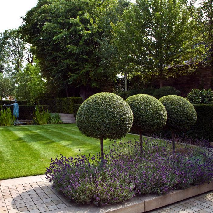 Gorgeous Modern Country Back Garden from Modern Country Garden Combos: Lavender And Topiary