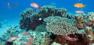 coral reef 2