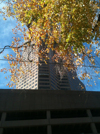 autumn window cleaning