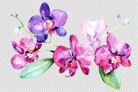 Branch of purple orchids PNG watercolor set