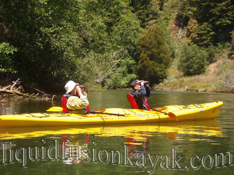 birding, kayak, tour