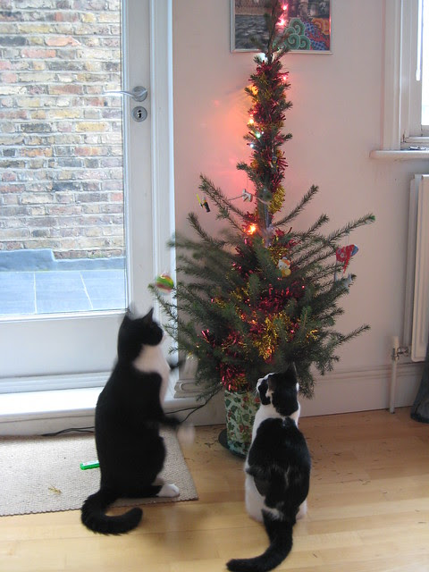 Cats meet Christmas tree