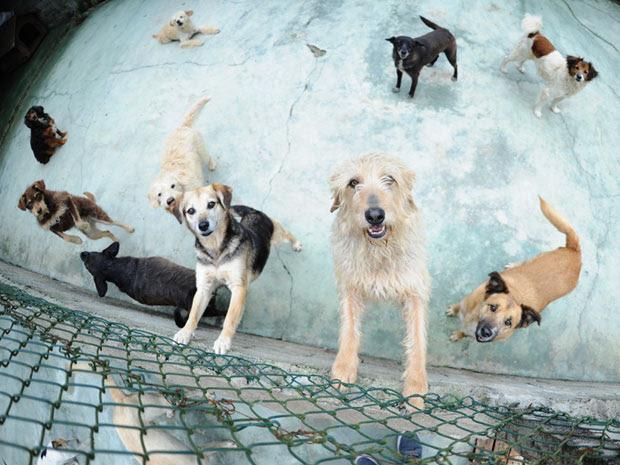 Protetora Telma cuida de mais de 60 animais, e se dedica a cães abandonados há mais de 20 anos (Foto: Raul Zito/G1)