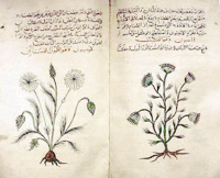 Fitoterapia araba