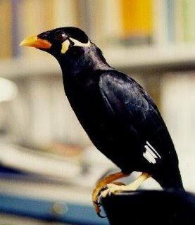 Alasan Mengapa Burung Beo Pandai Berbicara