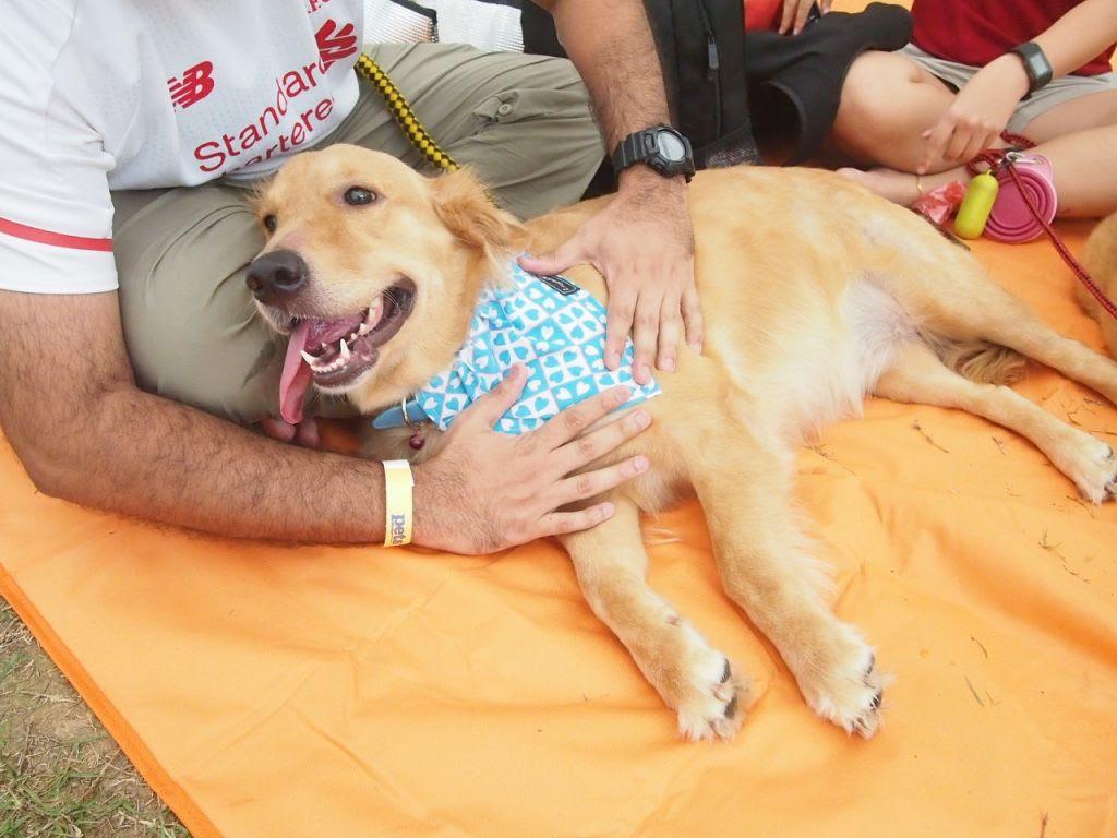 photo Pets Picnic 2016 7.jpg