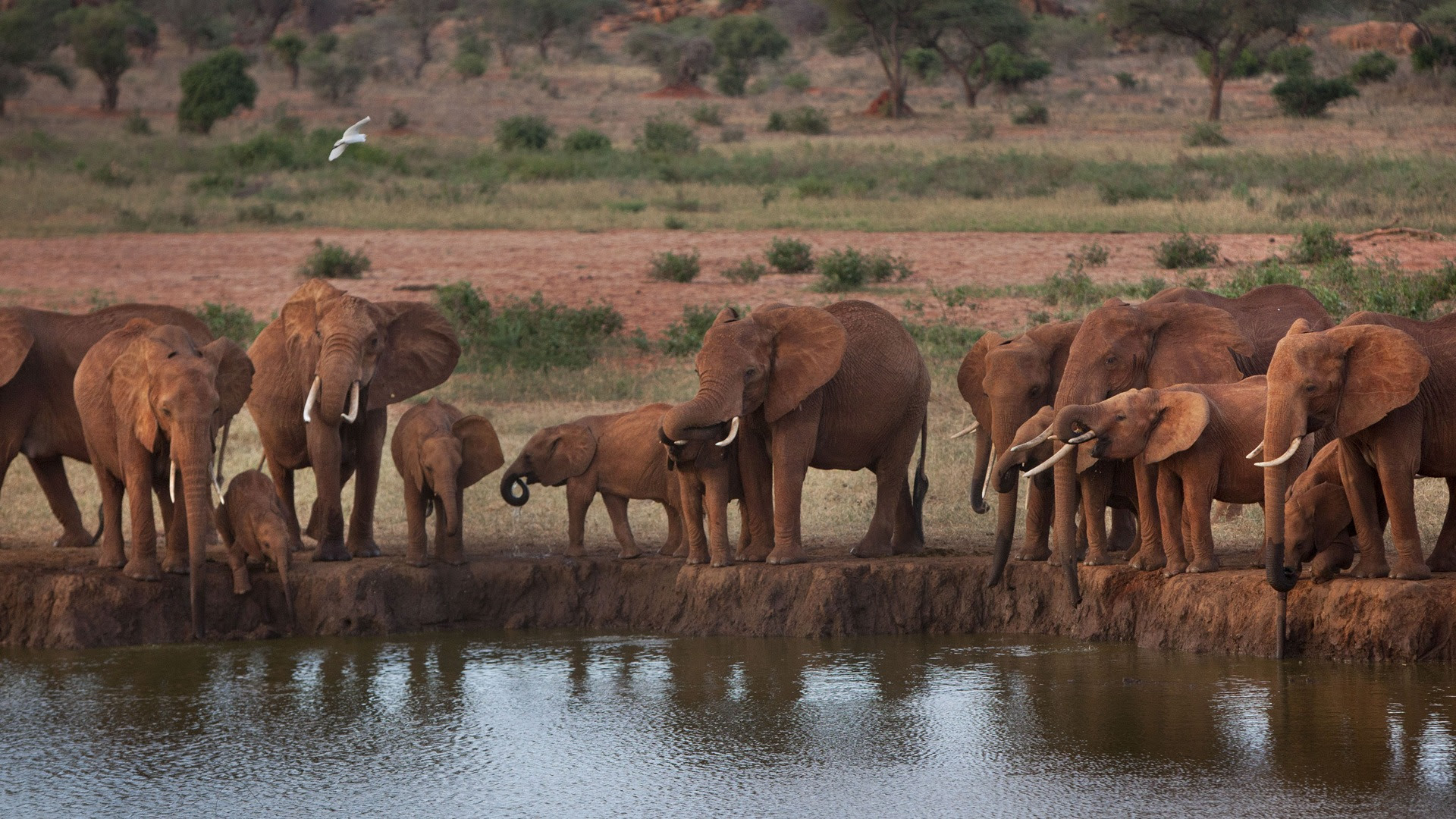 How Paul Allens $7 Million and Big Data Are Combating Africas Elephant Crisis