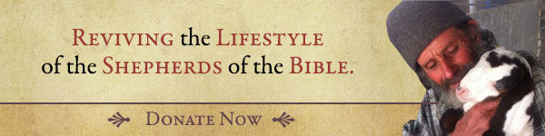 Help revive the lifestyle of the Jewish shepherd's of the Bible