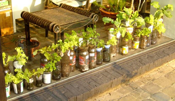 Bottle gardening – some experiments (Willem) | Container Gardening