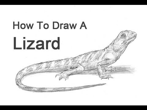 Labelled Diagram Of A Lizard
